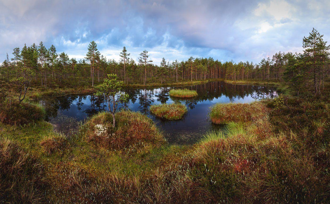 болото, ленобласть, фототур, Ленинградская область, , Арсений Кашкаров