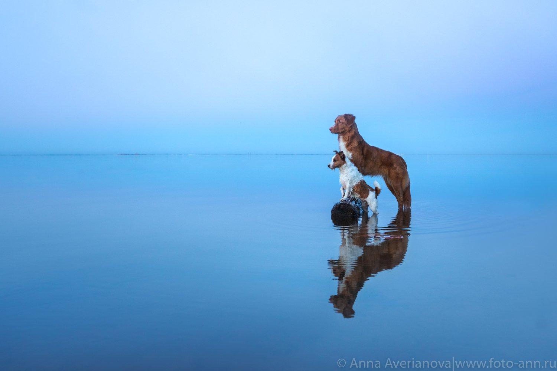 море, собаки, Анна Аверьянова