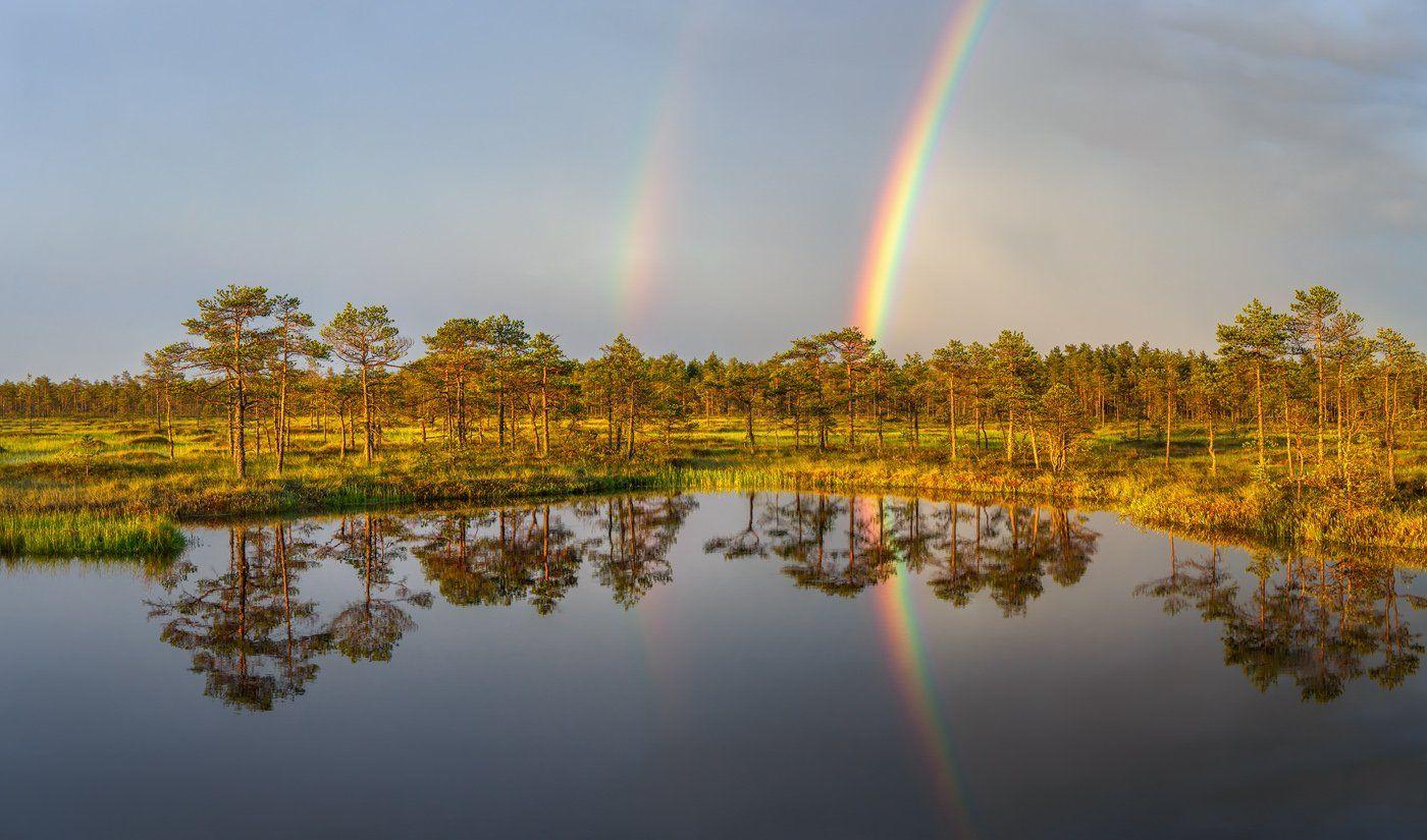 болото, радуга, ленобласть, ленинградская область, Арсений Кашкаров