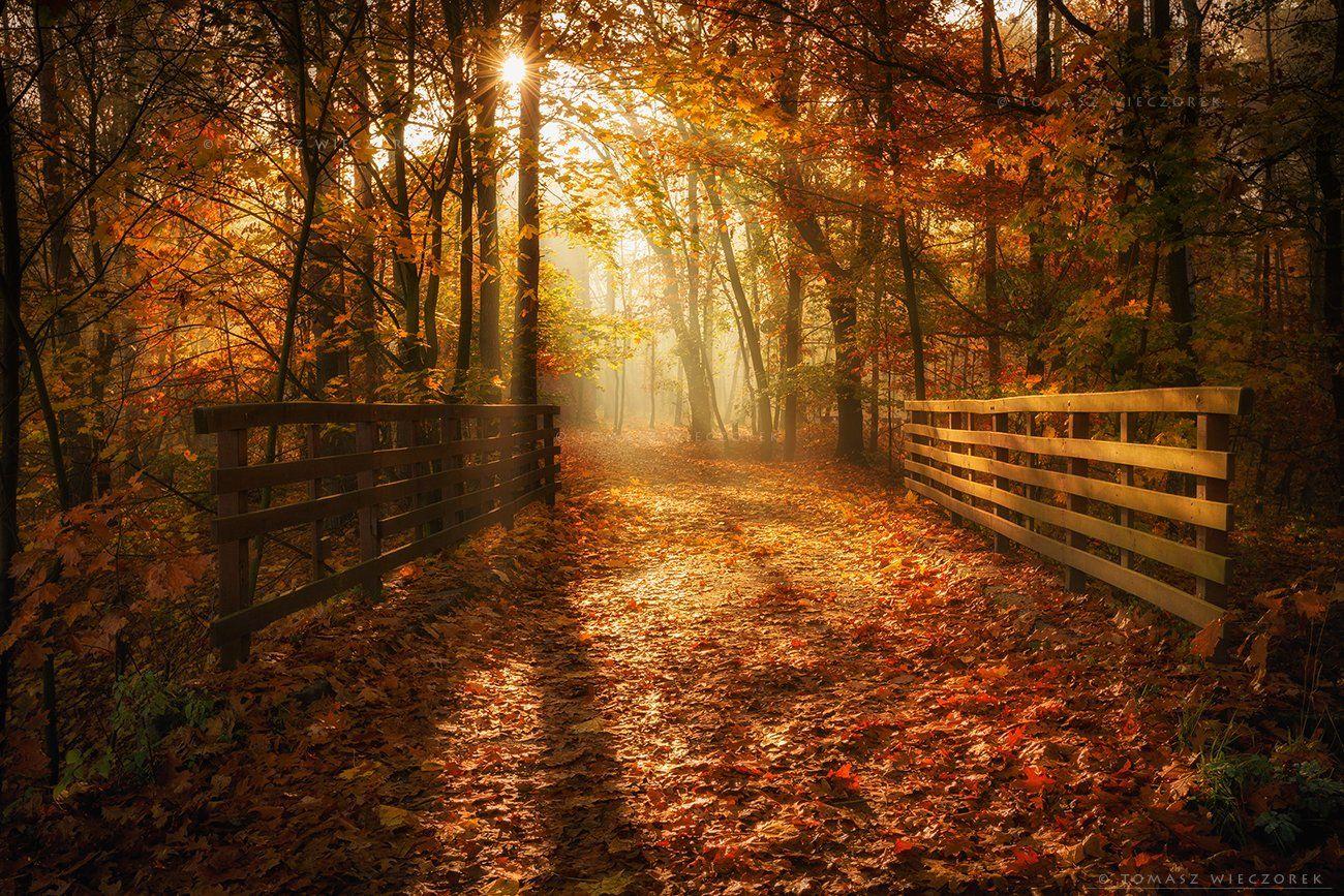 forest, poland, polish, landscape, sunrise, sunset, colours, autumn, awesome, amazing, adventure, travel, beautiful, morning, bridge, sun, leaves, Tomasz Wieczorek