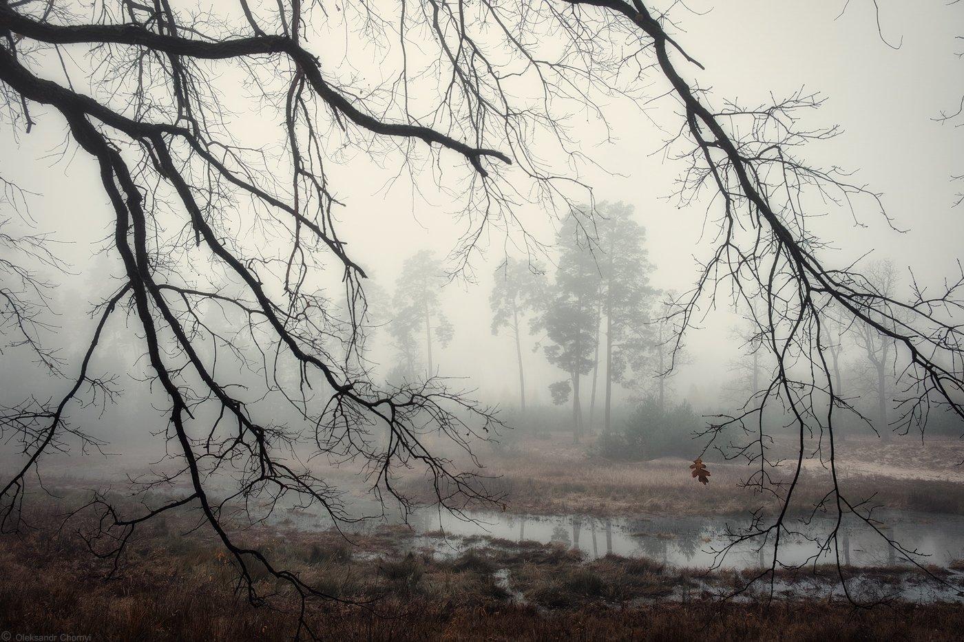 украина, коростышев, киричанка, природа, лес, полесье, озеро, осень, октябрь, мысли, чувства, туман, тишина, ветви, передний, план, уединение, счастье, жизнь, воздух, чистый, вдохновение, облака, отражение, трава, березки, деревья, просторы, фотограф, чор, Александр Чорный