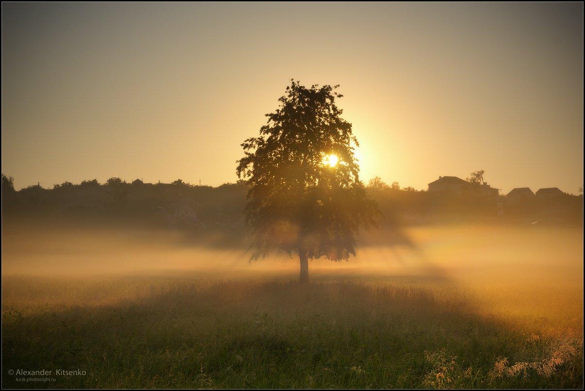 утро, луг, роса, туман, дерево, околица, лучи, солнце, солоницевка, Александр Киценко
