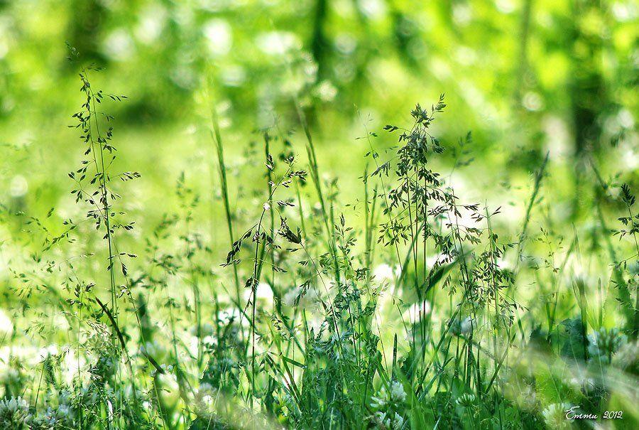 трава, природа, лето, етти