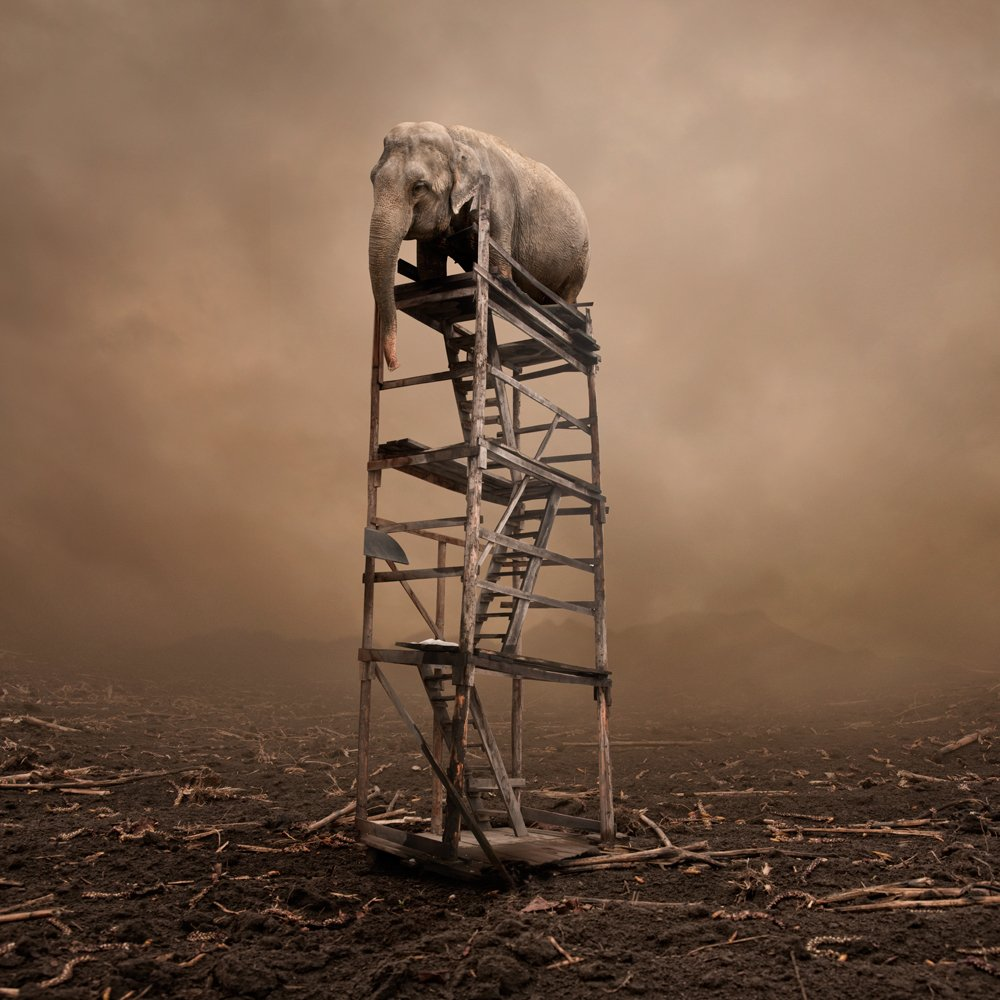 mist, field, sky, fog, clouds, alone, climb, stairs, ground, elephant, mounting, lost,, Caras Ionut
