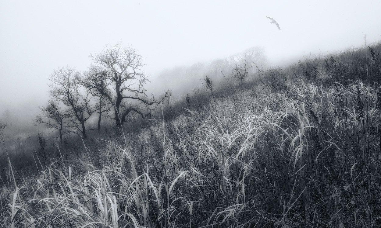 туман, птица, деревья, трава, Андрей Кровлин