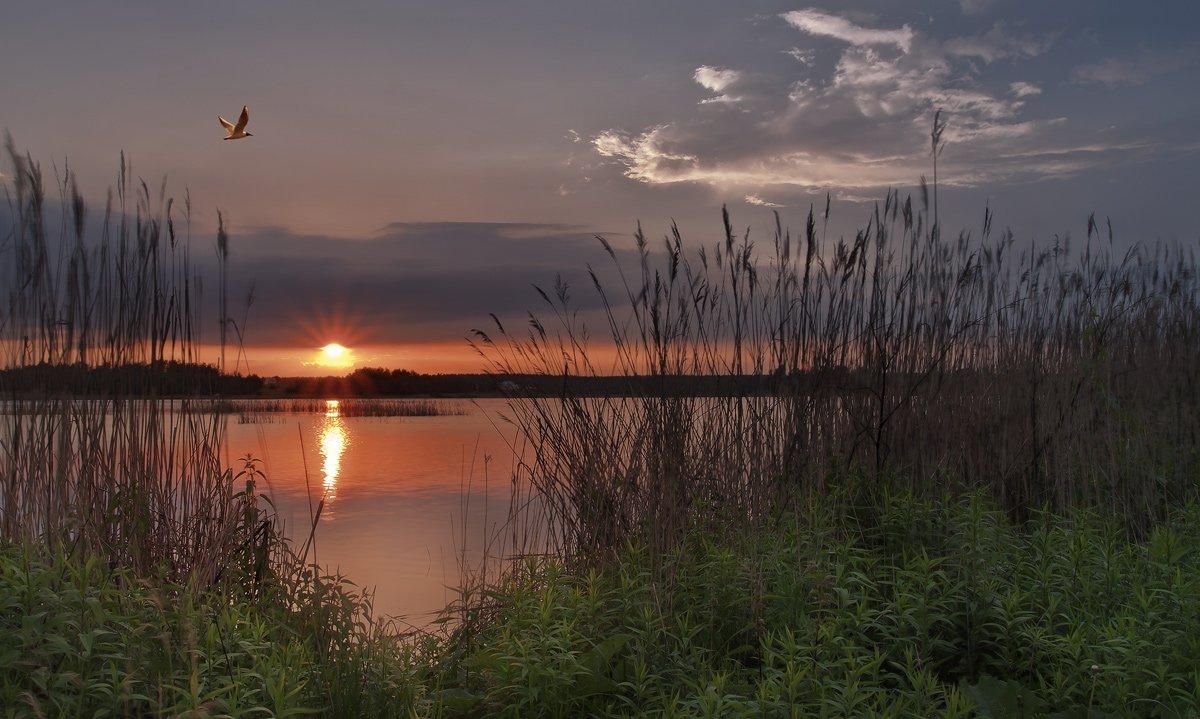 озеро, купавна, Андрей Леонидович