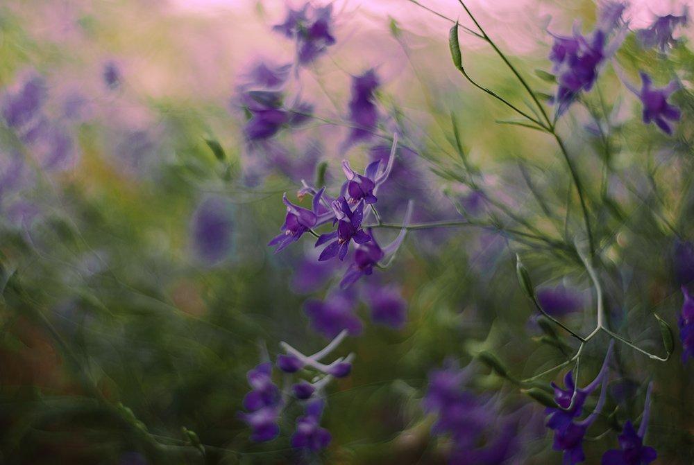 лето, луга, травы, цветы., Александр