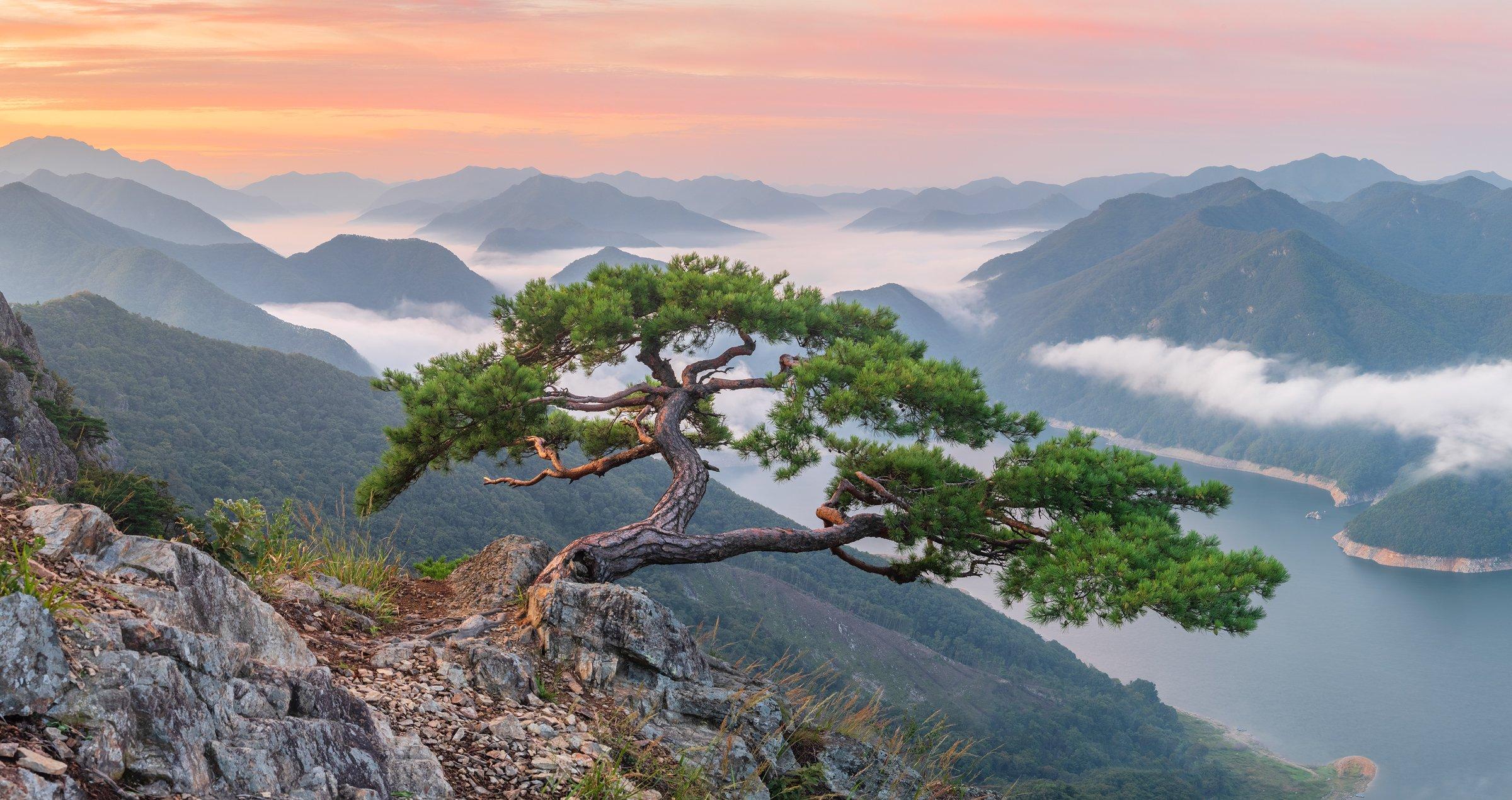 mountains,peak,hiking,fog,clouds,pine,tree,cliff, 류재윤