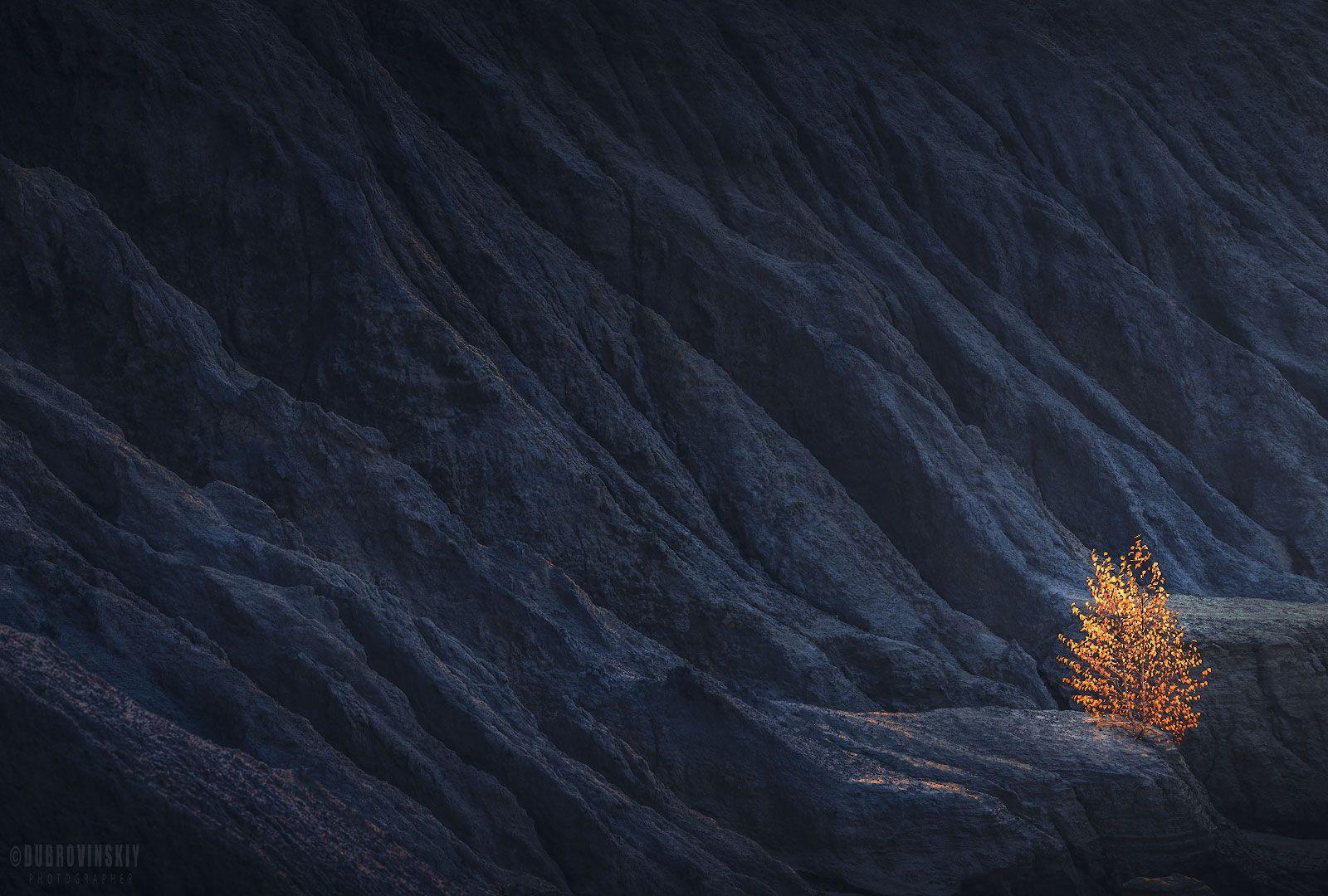 дерево, осень, карьер, тульская область, романцевские горы, Дубровинский Михаил