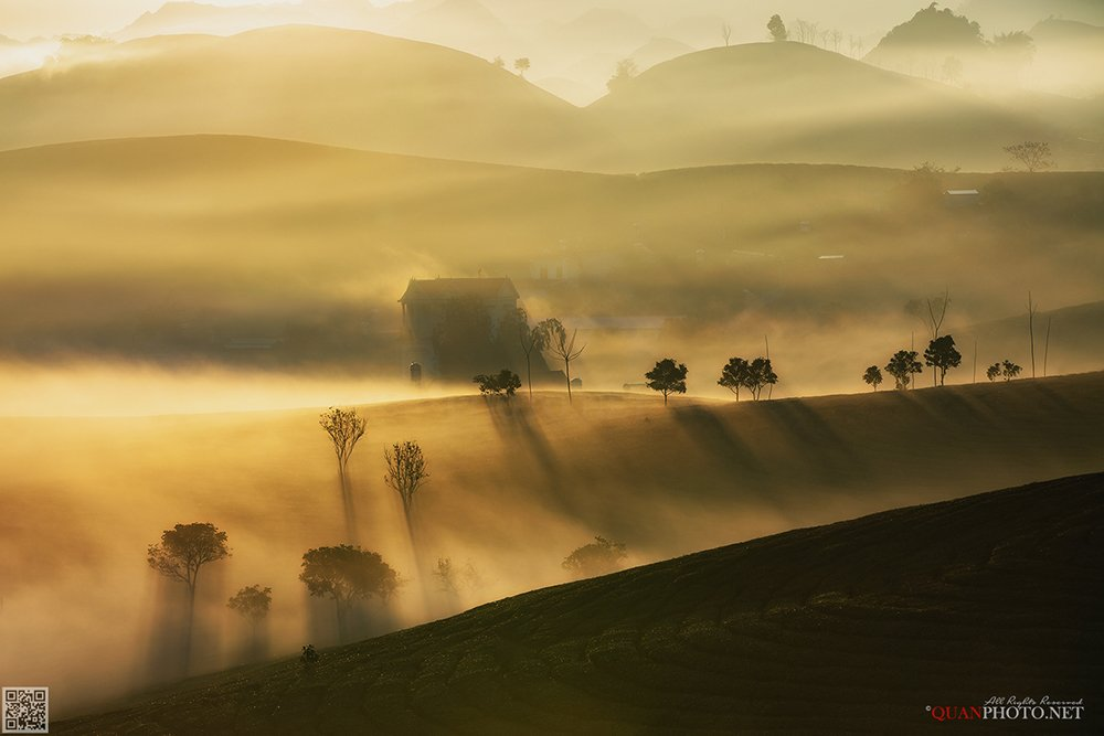 quanphoto, landscape, morning, sunshine, dawn, misty, tea, hill, mountains, highland, plateau, vietnam, quanphoto