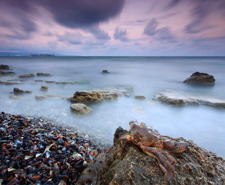 краб, черное море, болгария, закат, море,, Павел Пронин