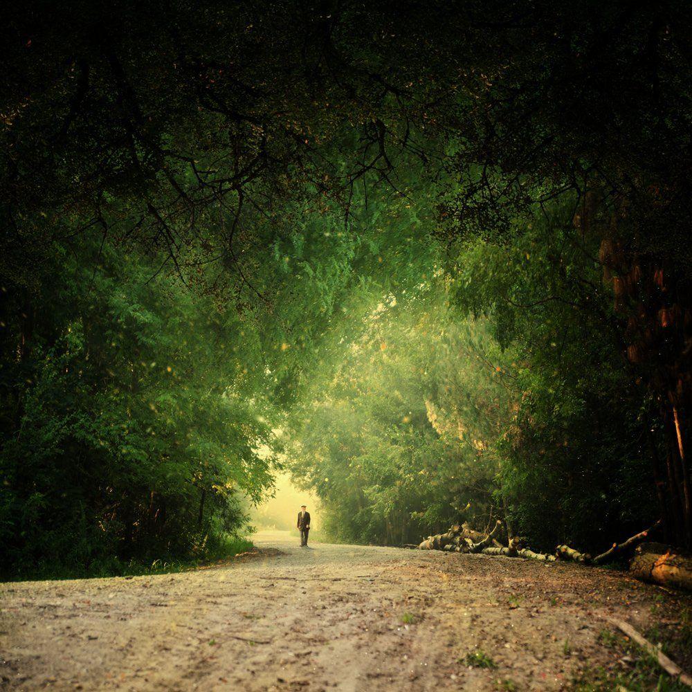 forest, light, man, green, magic, walking, Caras Ionut