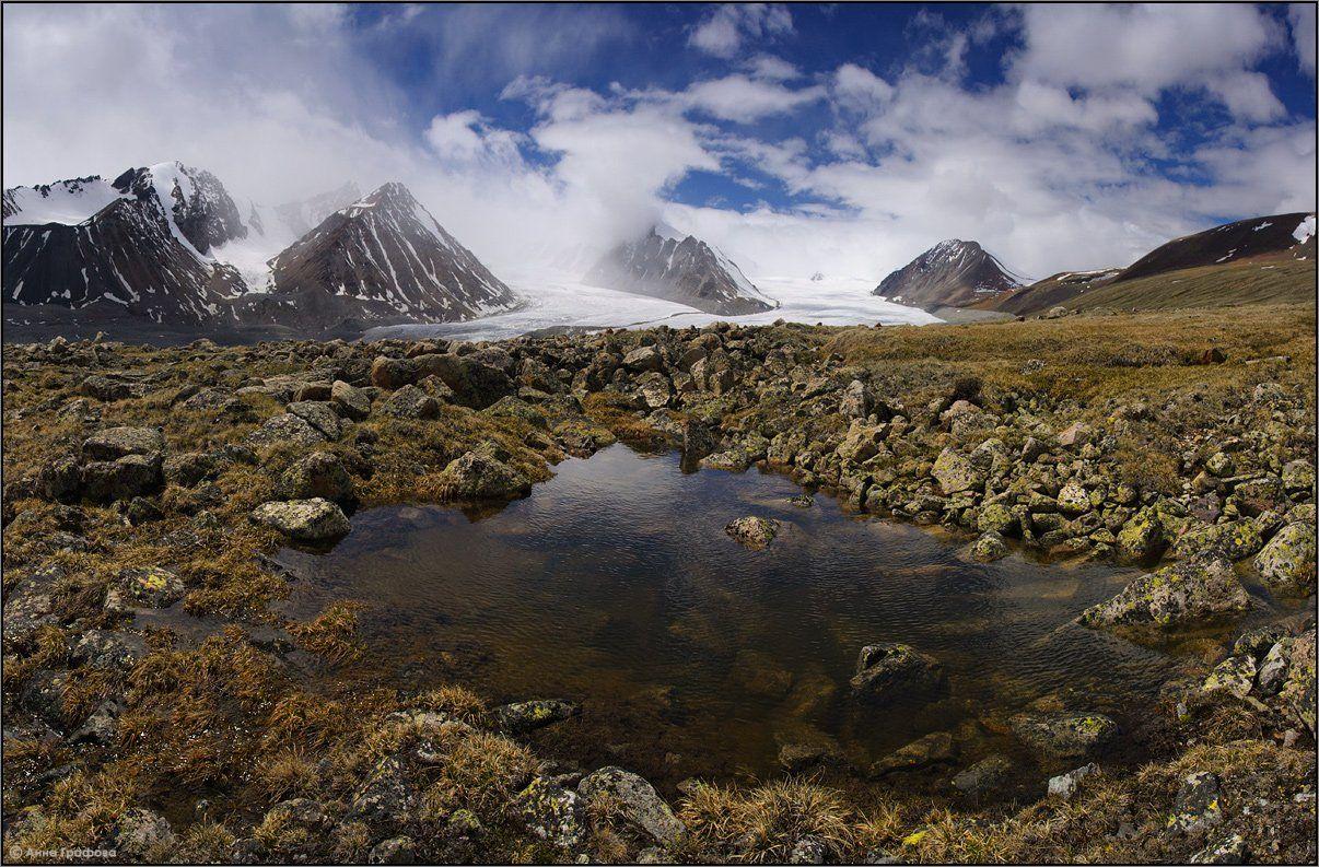 монголия, алтай, июнь, ледник потанина, ледник александры, высокогорная тундра, алтай таван богд, аня графова, Аня Графова