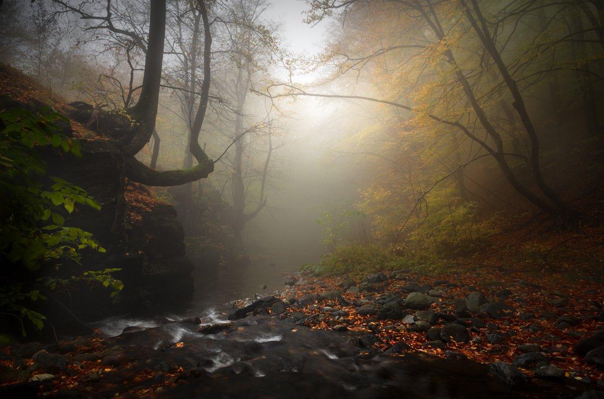 landscape nature scenery forest wood  autumn mist misty fog foggy rriver mountain staraplanina bulgaria туман лес, Александров Александър