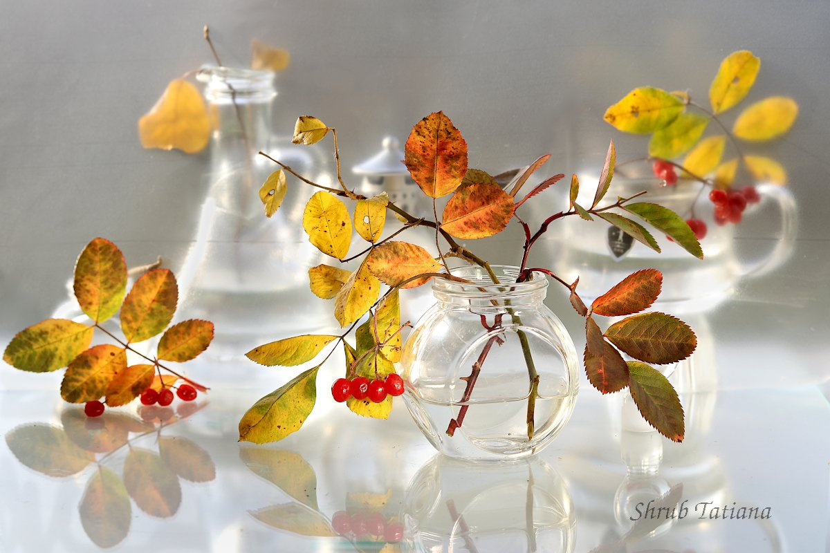 осень, листья, ветка, натюрморт, Шруб (Беляева) Татьяна