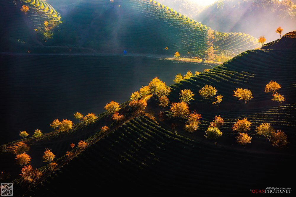 quanphoto, landscape, nature, sunlight, hill, plantation, tea, blossom, autumn, mountains, vietnam, quanphoto
