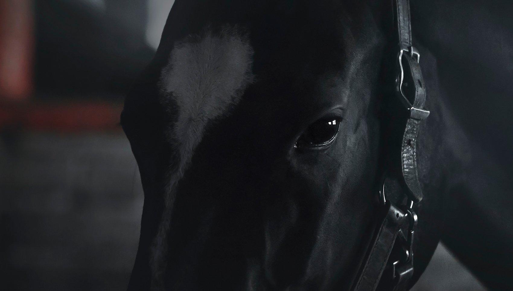 akhal-teke, horse, Tsogoeva Erika