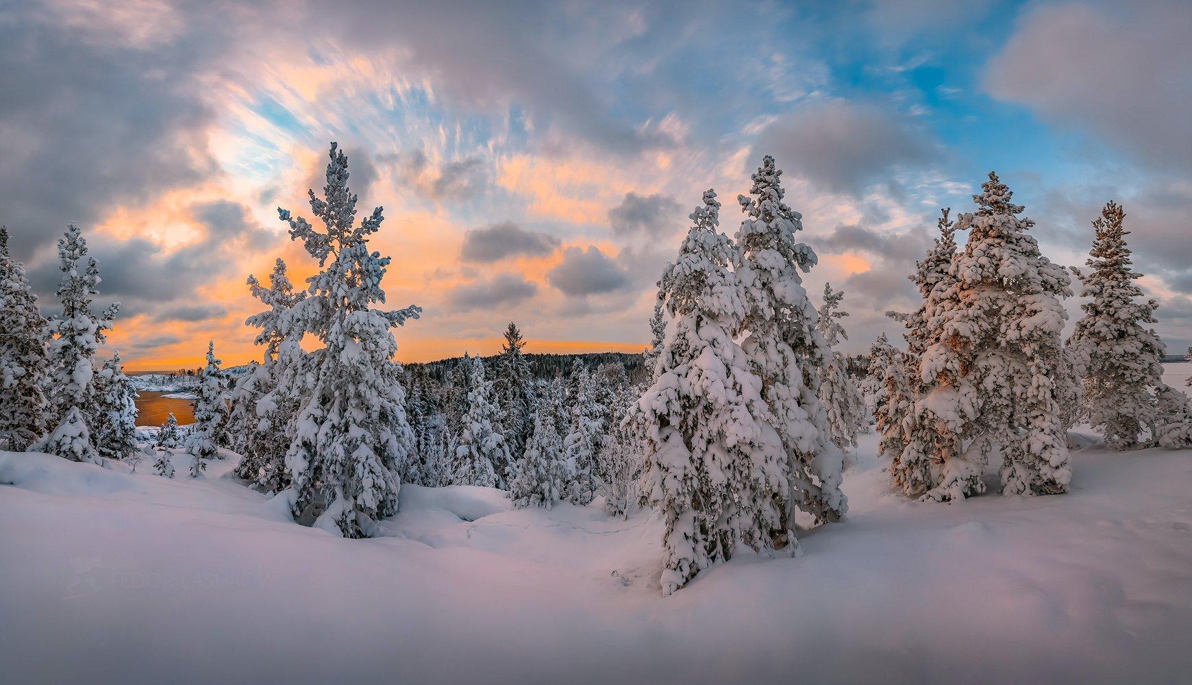 ладожское озеро, карелия, зима, деревья, сосна, сосны, в снегу, заснеженное, закат, облака, снег, зимнее,, Лашков Фёдор