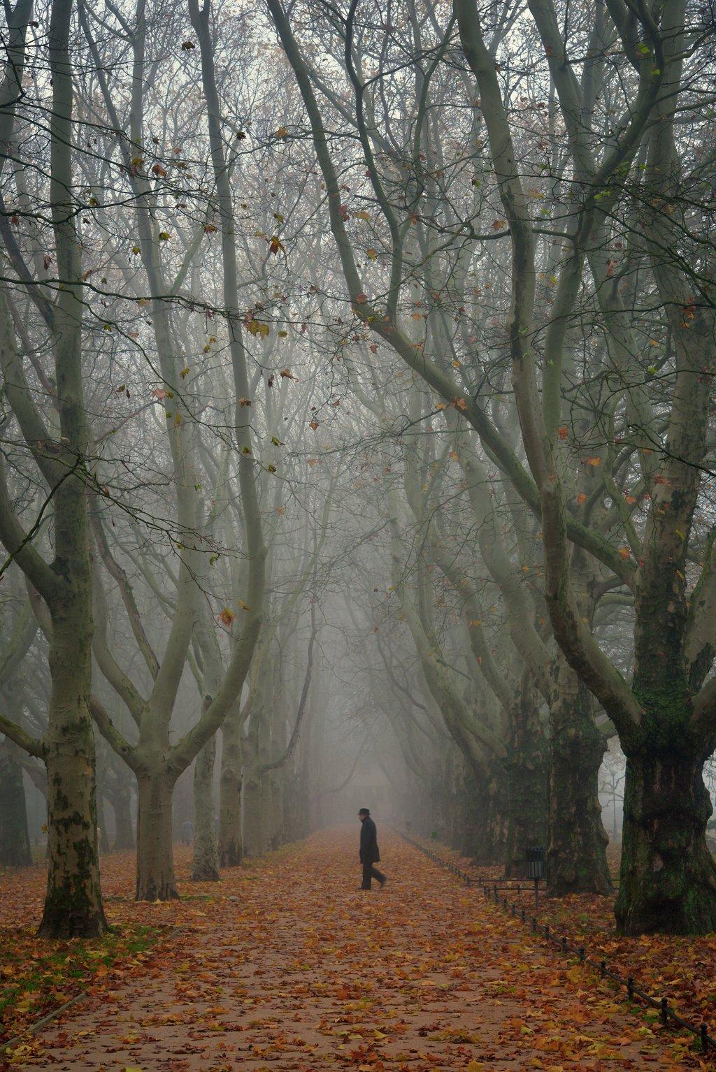 детектив walk autumn fall alley trees path road poland tree mist foggy morning, Radoslaw Dranikowski
