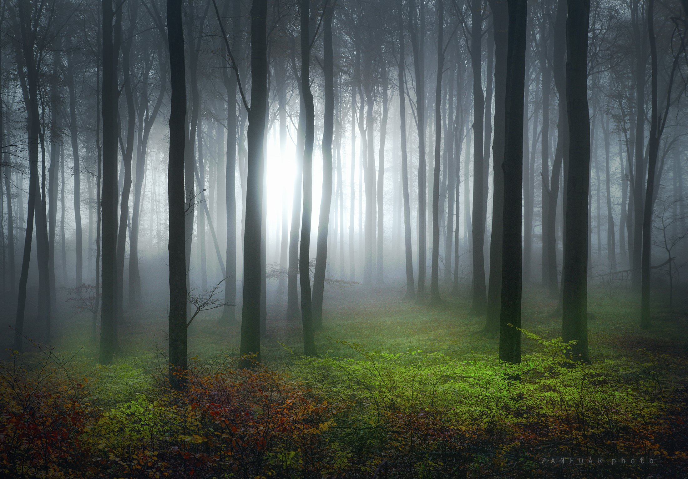 мистический лес,лес,туман, дымка, осень, лес ,никон ,zanfoar ,чешская республика ,никон д750 ,моравия,богемия.занфоар,чехия,  Zanfoar