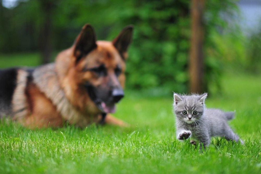 кот, кошки, котята, котенок, собаки, животные, Сотсков Николай