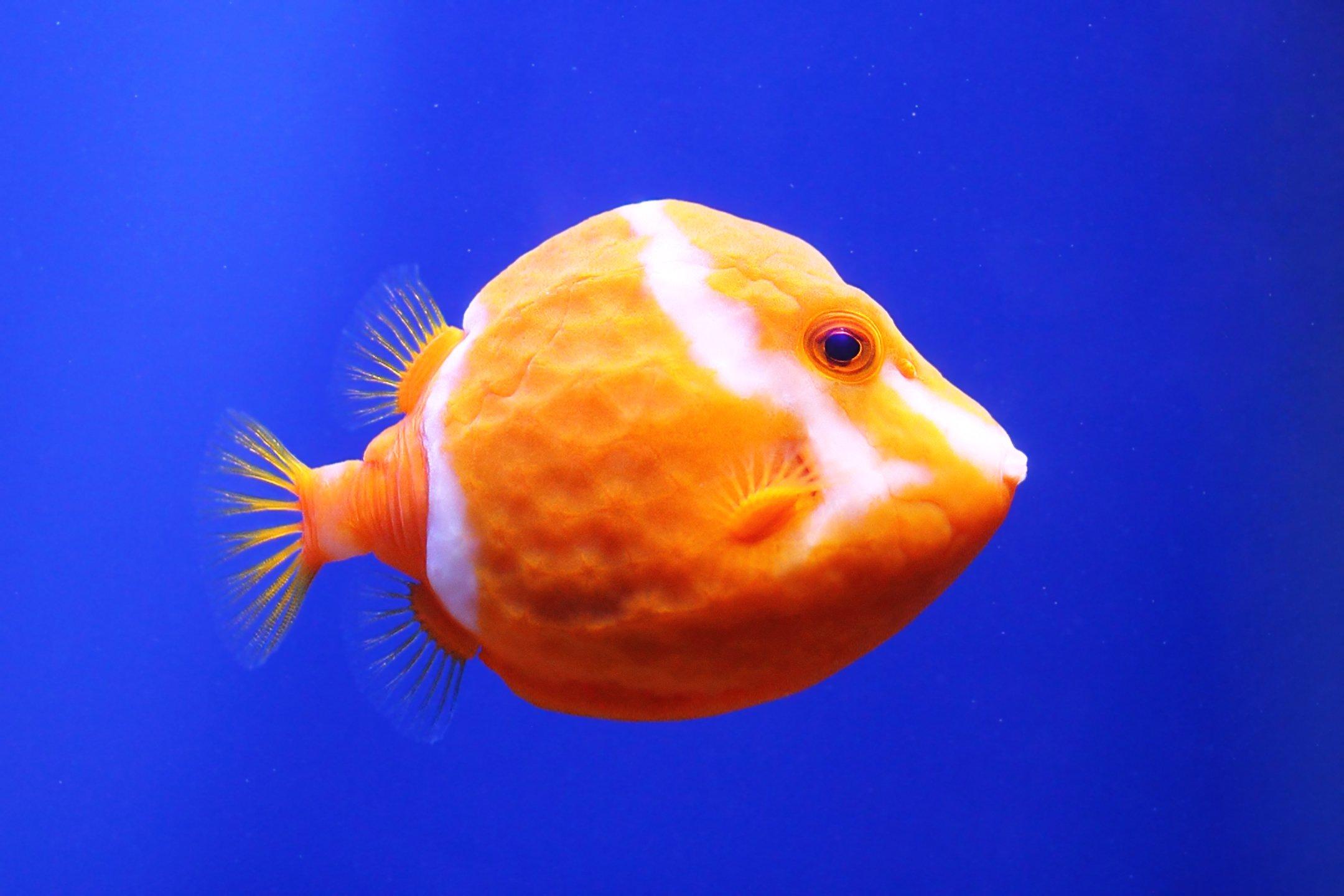 рыба, рыбка, рыбы, рыбки, вода, плавники, fishes, underwater, fins, swim, Салтыков Дмитрий