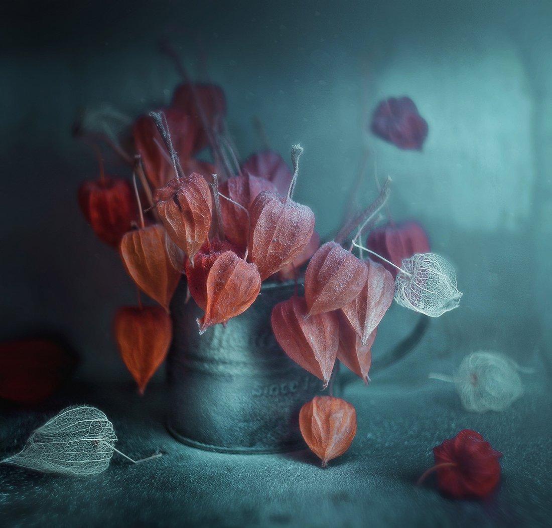 , Andreeva Svoboda
