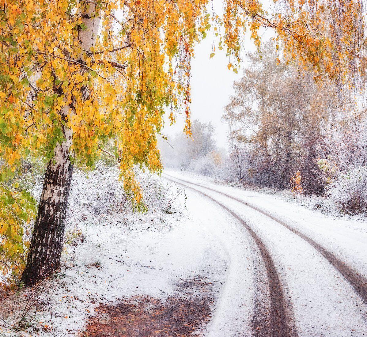осень, подмосковье, лес, снег, Липецких Владимир