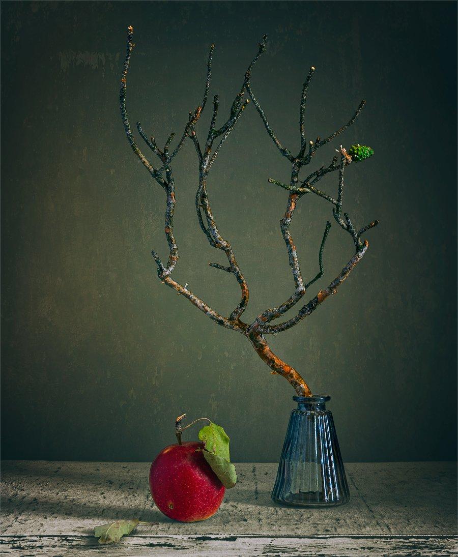 still life, натюрморт,    винтаж,    минимализм, ветка, шишка, яблоко, еда,, Шерман Михаил
