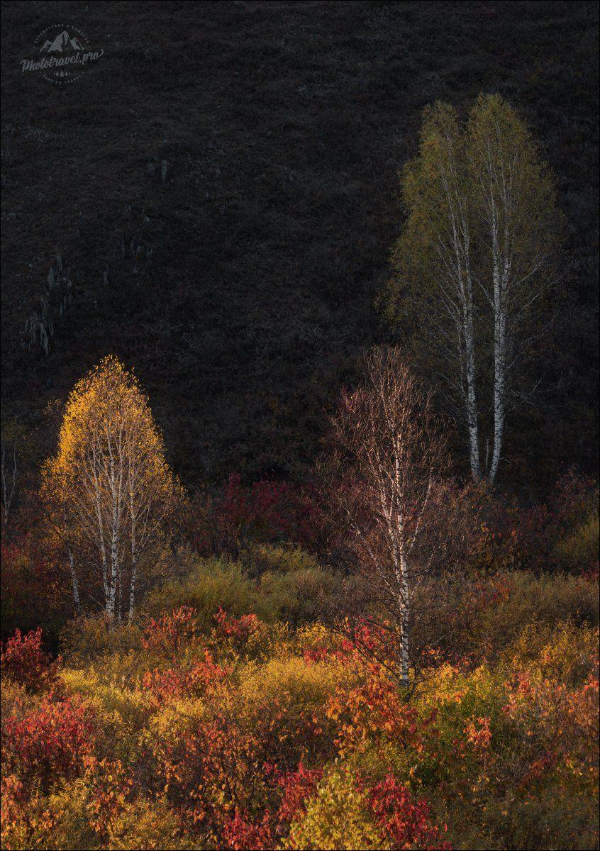алтай, осень, алтайский край, золотая осень, фототур на алтай, Влад Соколовский