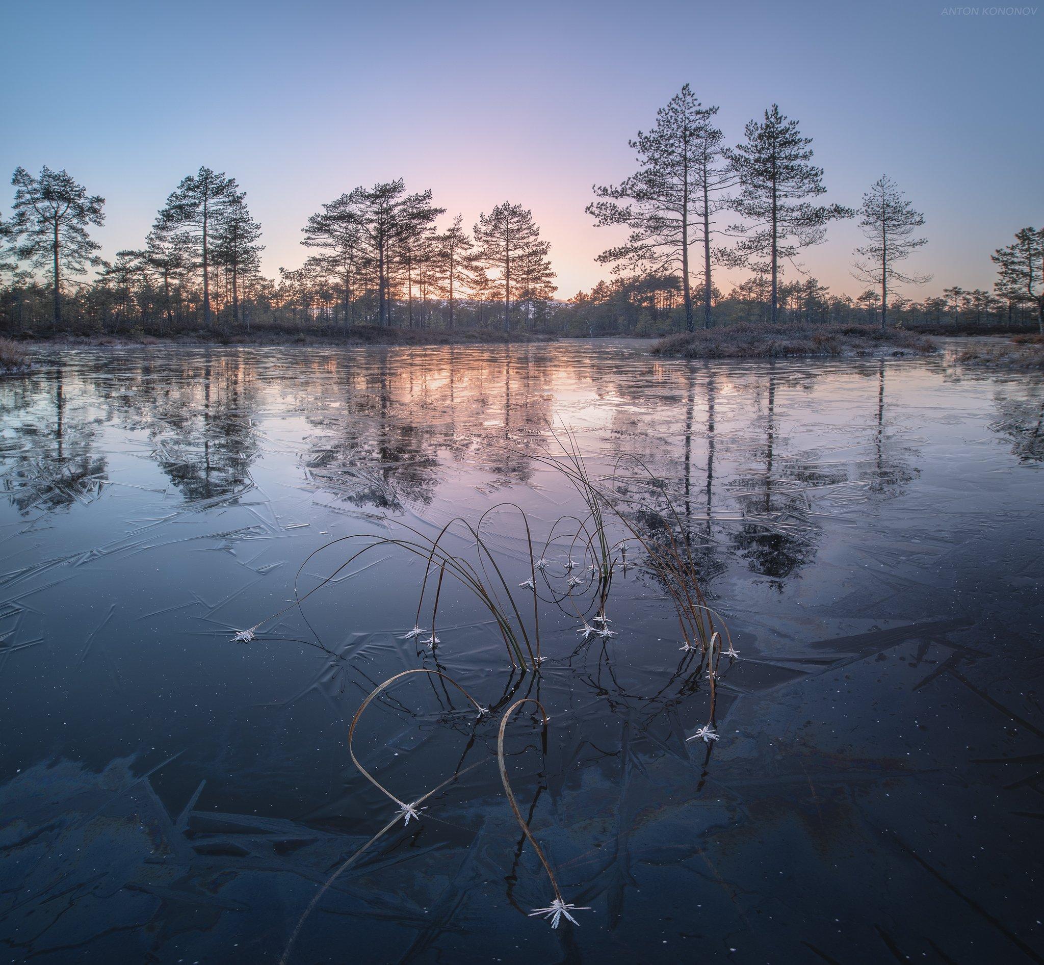 болото, лёд, сосны, закат, Кононов Антон