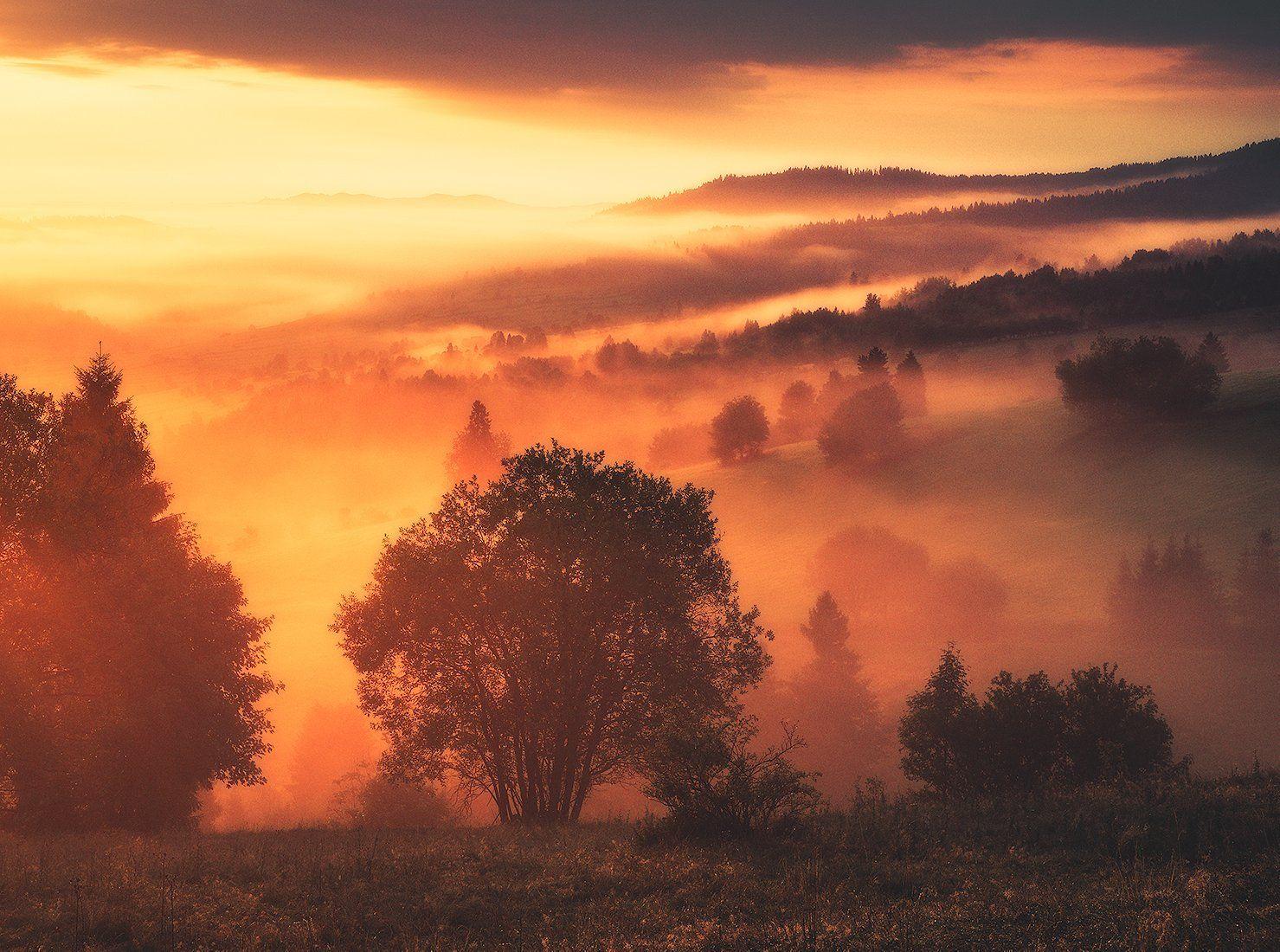 landscape, photogrpahy, love, nature, globalshotz,amazing,place,foggy,sunrise, Jakub Witos