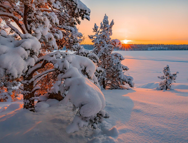 ладожское озеро, карелия, зима, сосна, в снегу, заснеженное, снег, зимнее, закат, солнце, дерево, ветви,, Лашков Фёдор