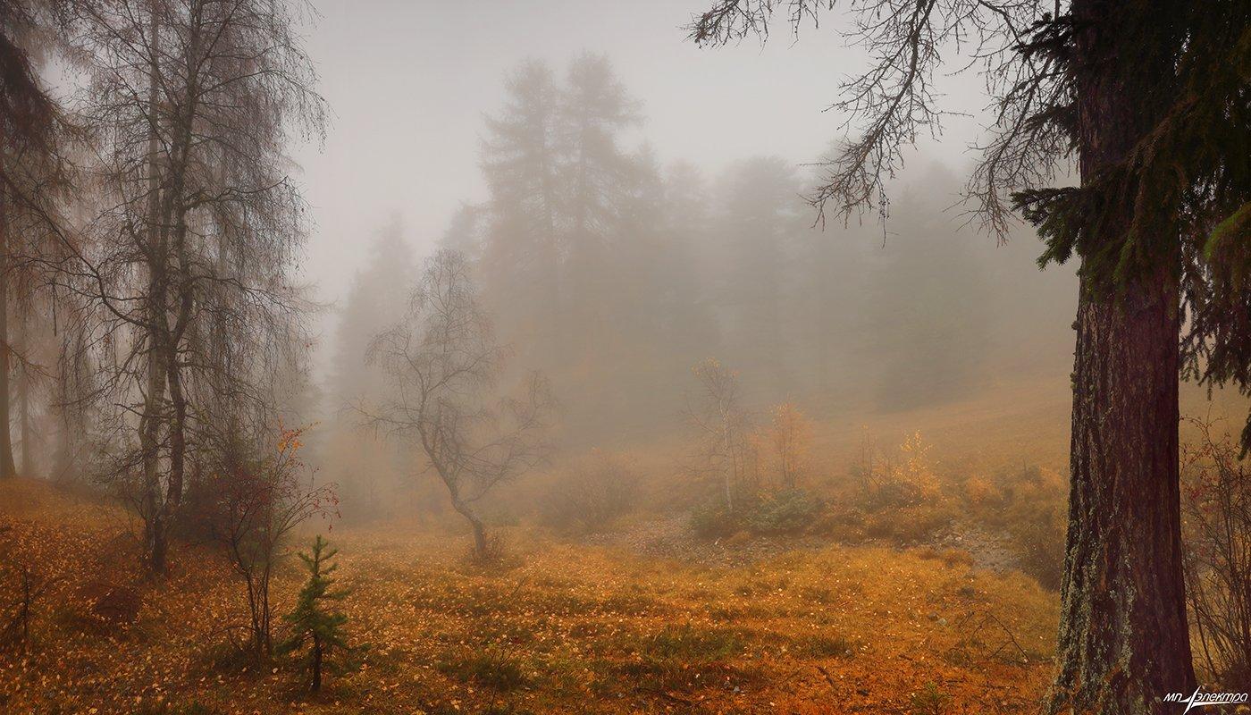 swiss, Матвеев Николай