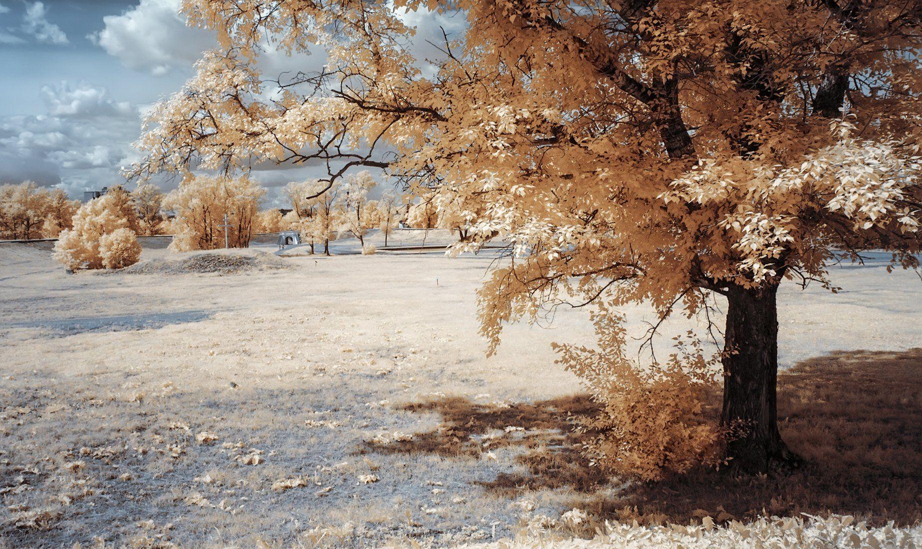 парк, деревья, лето, инфракрасная фотография,  Гобова Наталья