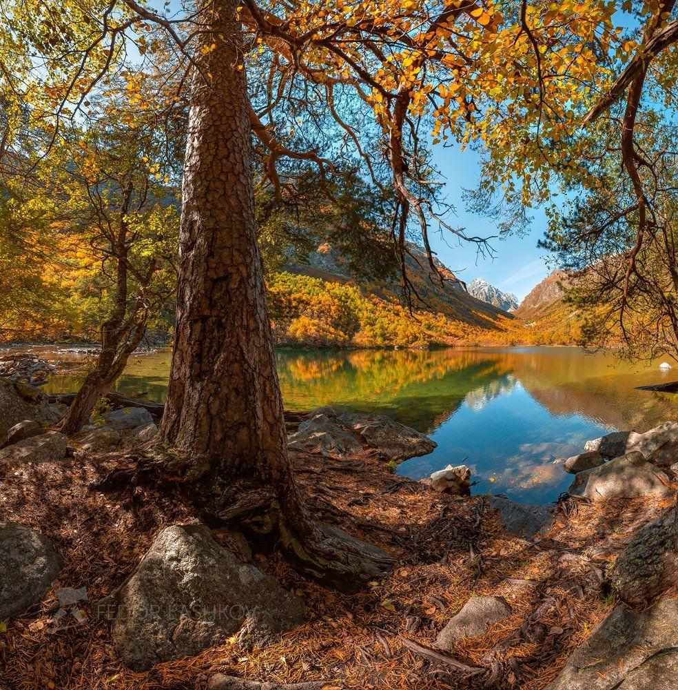 горы, домбай, осень, лес, тебердинский государственный природный биосферный заповедник, кавказ, бадукские озёра, озеро, бадук, хребет, сосна, лес, дерево,, Лашков Фёдор