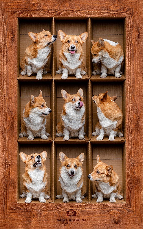 dog, fun, box, boxing, photoshop, creative, level, floor, nadeika