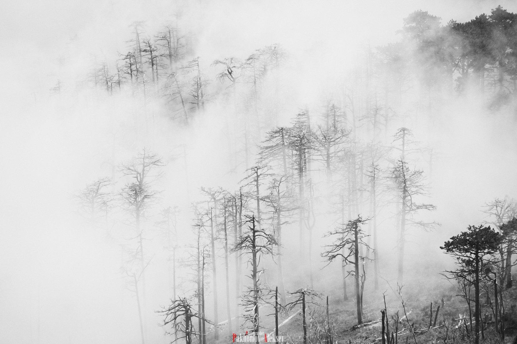 monochrome, black, white, bw, b&w, blackwhite, black&white, landscape, mystery, three, fog, russia, crimea, чб, монохром, пейзаж, деревья, туман, природа, nature, outdoor, Pakhomov Aleksey