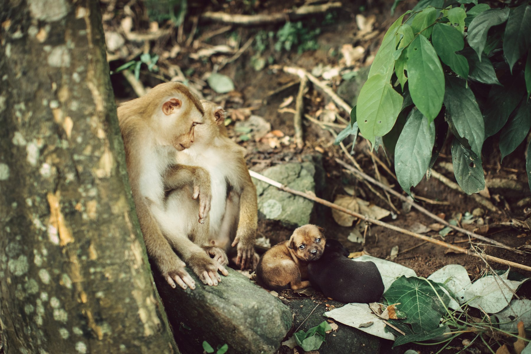 обезьяны обезьяна щенки собаки, Малахова Инна