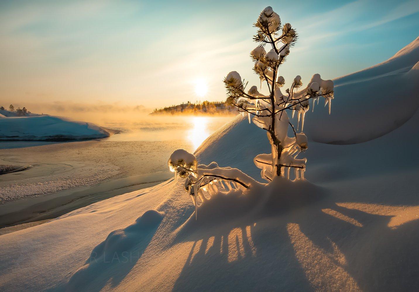 ладожское озеро, карелия, шхеры, национальный парк, зима, рассвет, солнце, наледь, вода, жёлтый, золотой, сосна, дерево, деревце, маленький, лёд, снег, туман,, Лашков Фёдор
