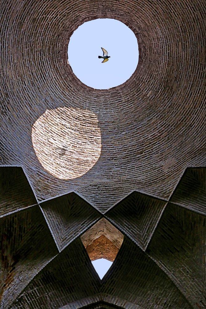street, conceptual, art, fine art, birds., Dadsetan Mohammad