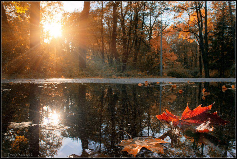 осень, Дмитрий Бакулин