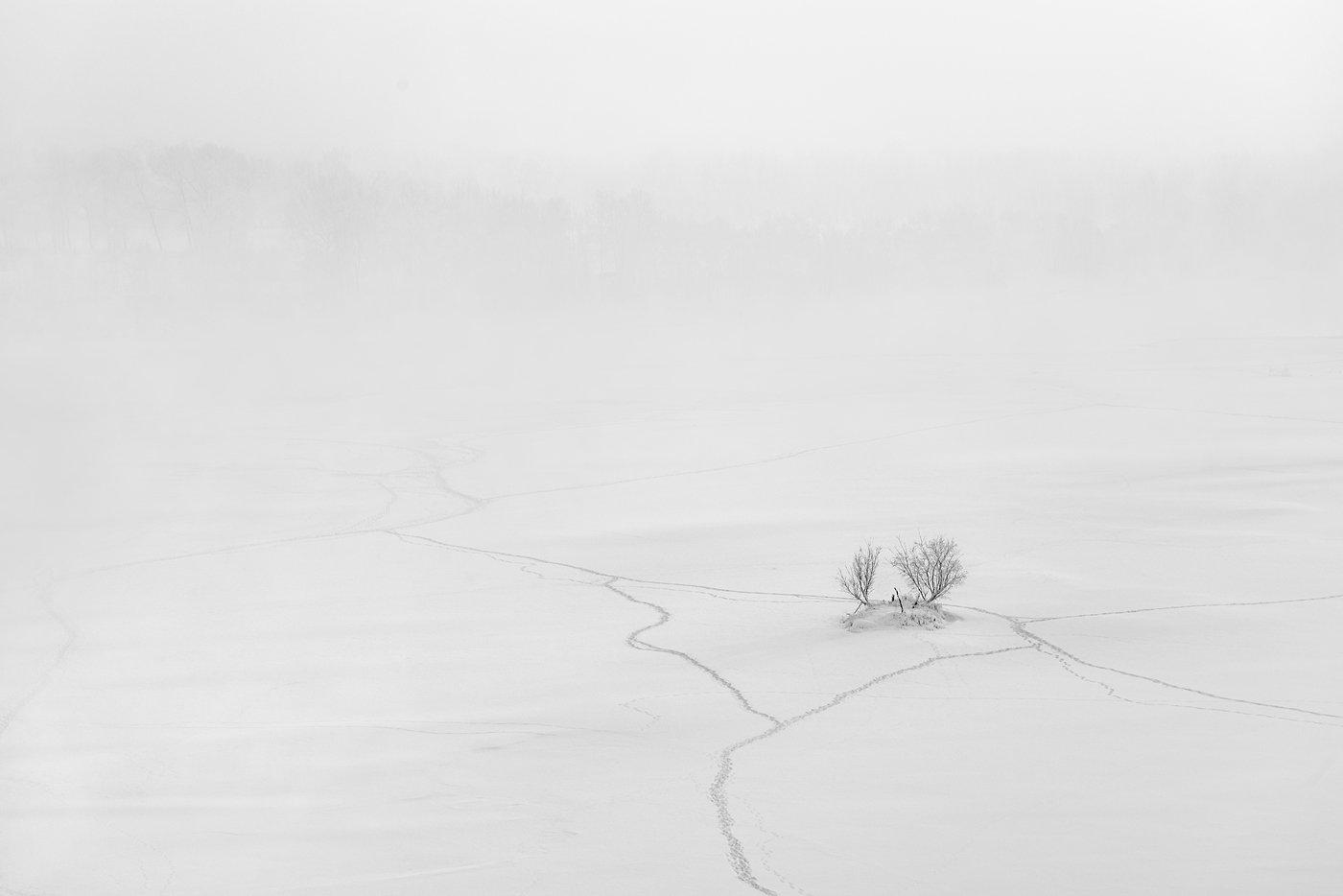 пейзаж, природа, лед, снег, туман, снегопад, тропа, дерево, куст, тропинки, река, зима, красноярск, енисей, татышев, чб, черно-белая, минимализм,, Антипов Дмитрий