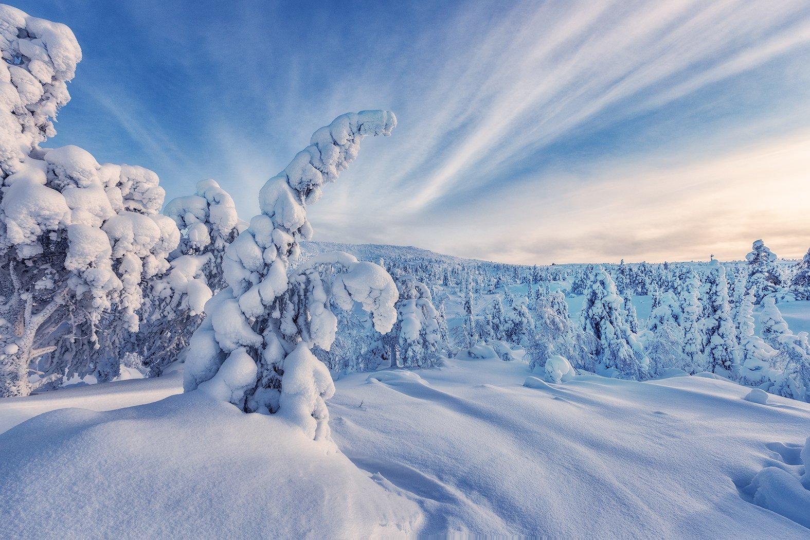 зима, снег, ели, кандалакша, Липецких Владимир
