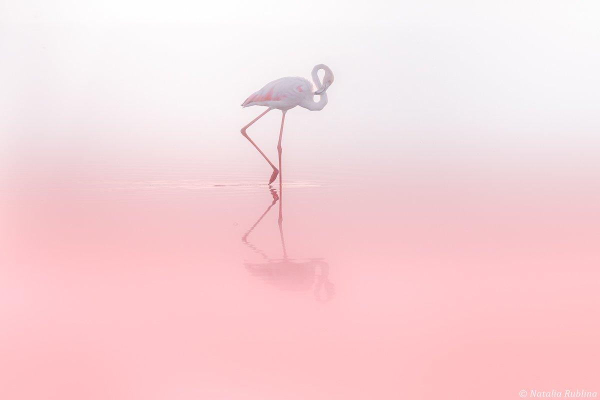 фламинго,птицы,животные,минимализм,природа,умиротворение,розовый,птица, Рублина Наталья