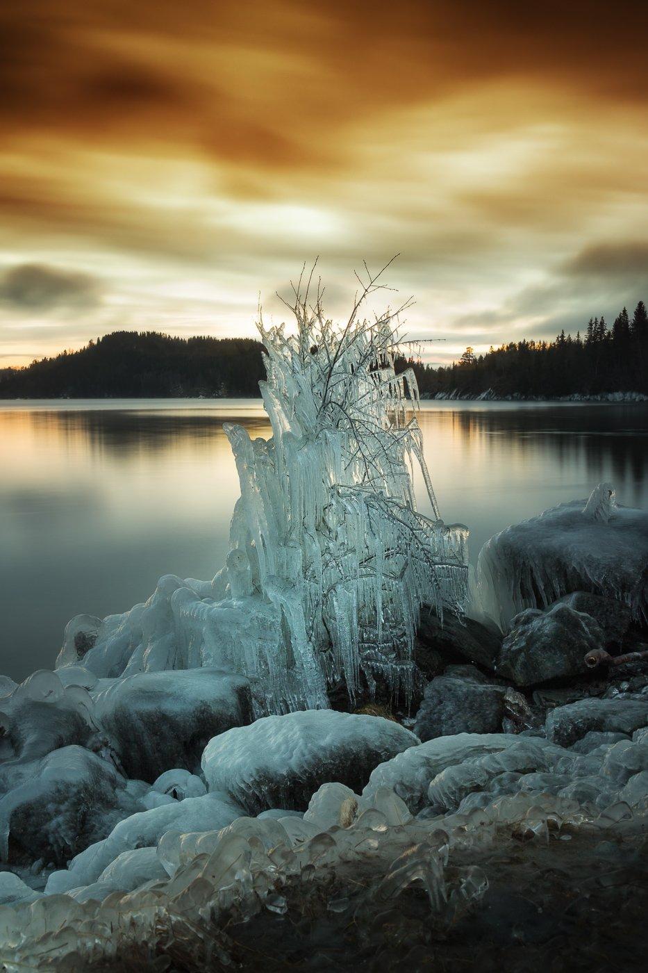 tree,ice,winter,wintertime,norway,frost,lake,sunset, Szatewicz Adrian