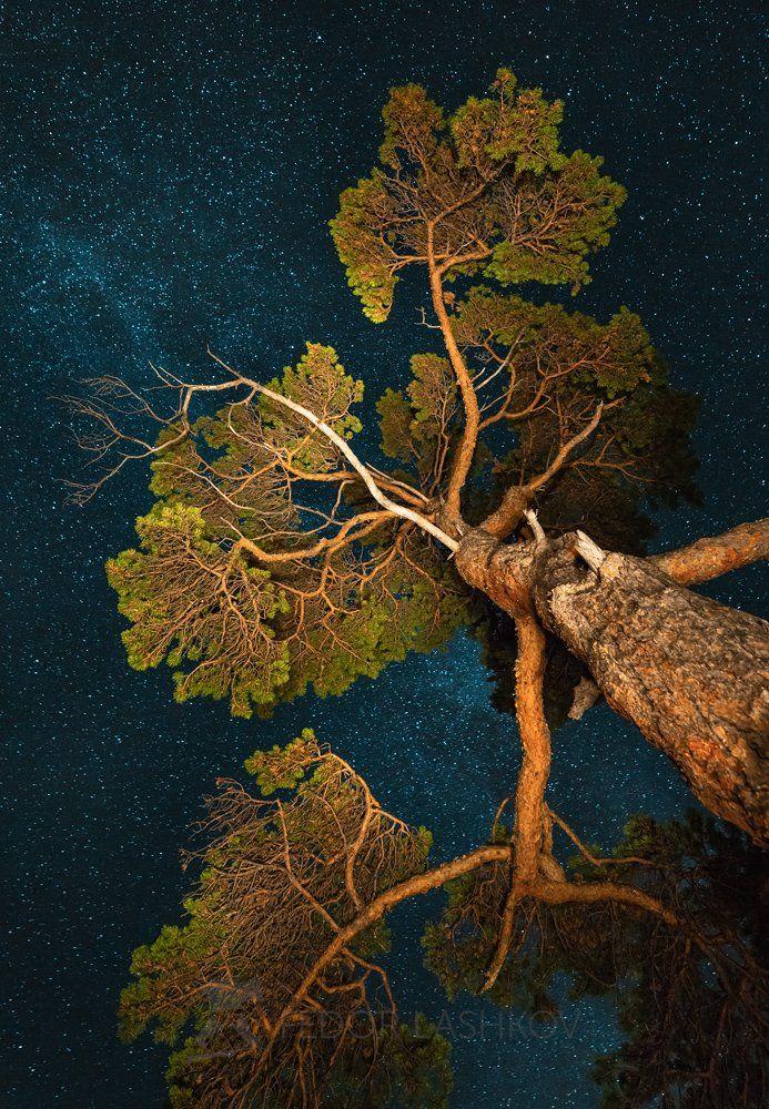 сосна, ночь, ночное, дерево, ствол, звёзды, млечный путь,, Лашков Фёдор