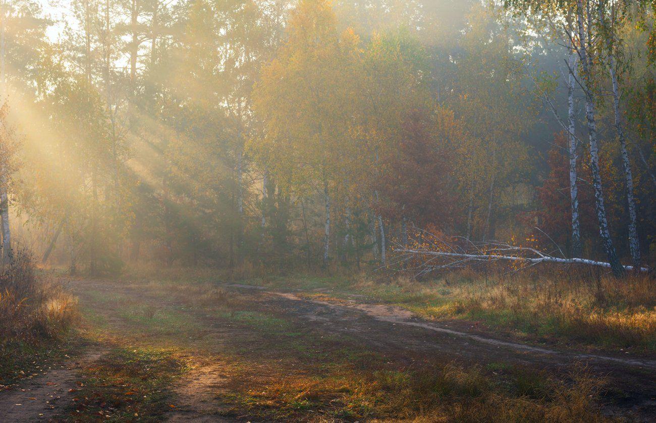 луг, осень, октябрь, утро, рассвет, туман, лучи, Галанзовская Оксана