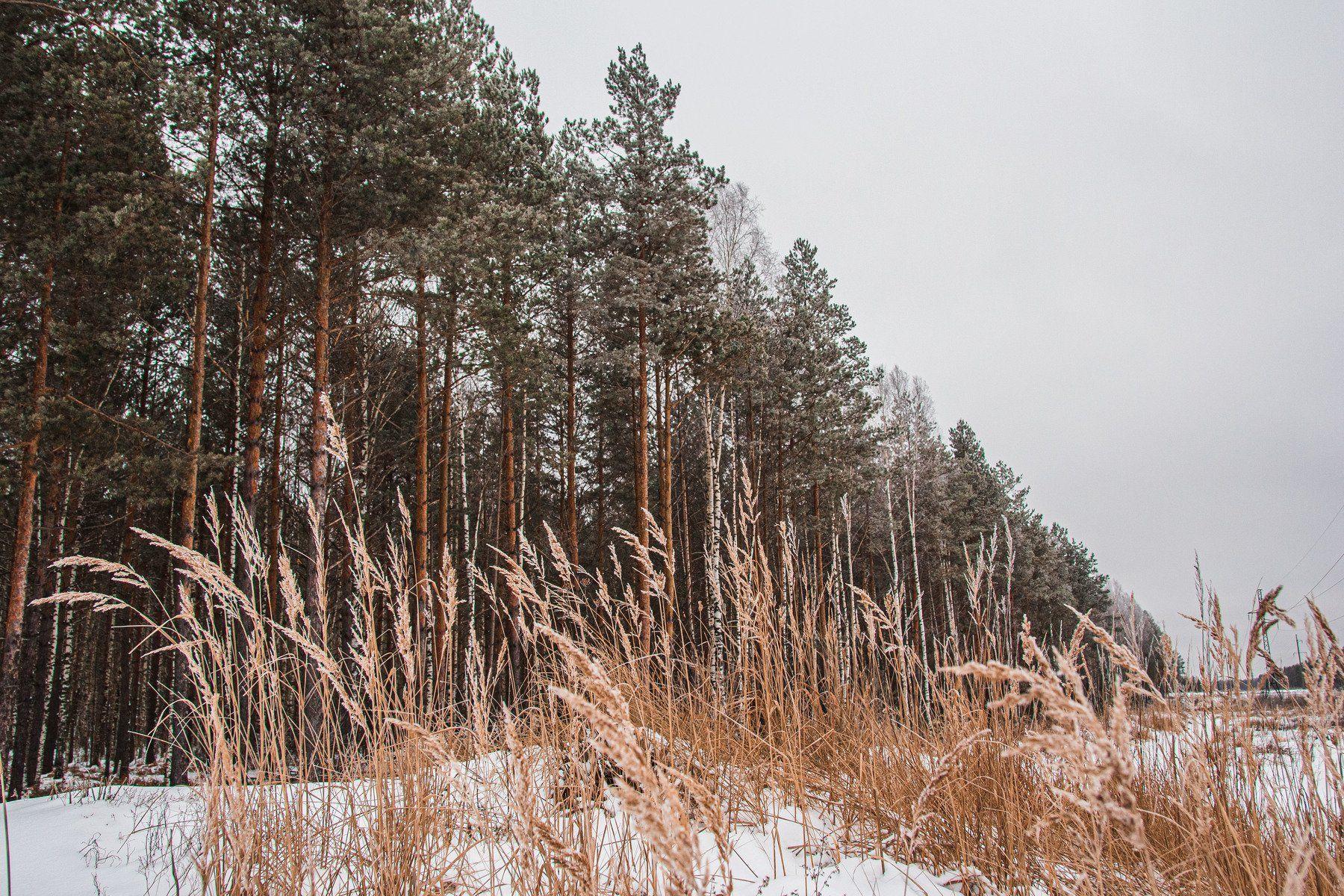 пейзаж, кулебаки, landscape, winter, зима, снег, snow, forest, сосны, pine trees, Васильев Владимир