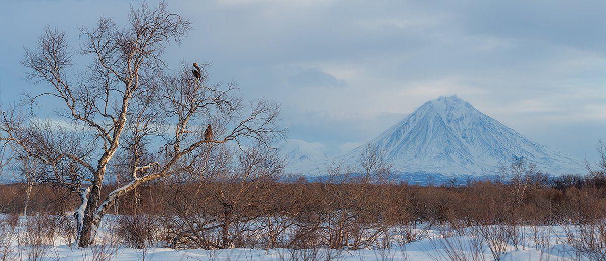 камчатка, орел, природа, путешествие, фототур, пейзаж, зима, Денис Будьков